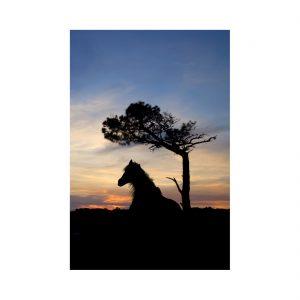 Cabalo